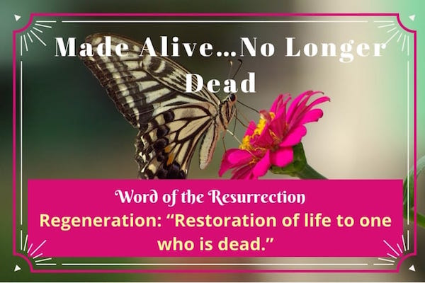 Regeneration-Made Alive…No Longer Dead