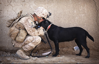 soldier and dog reunion