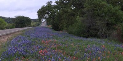 Road with Bluebonnets